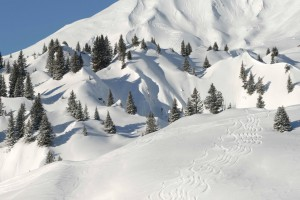 Powder downhills in Lech